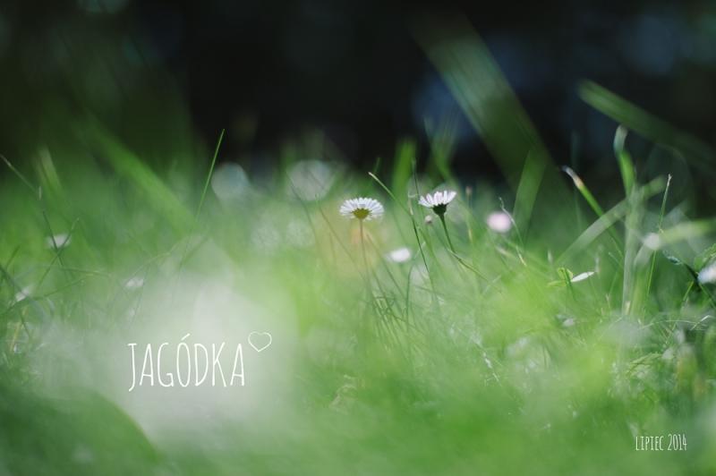 jagodka_001